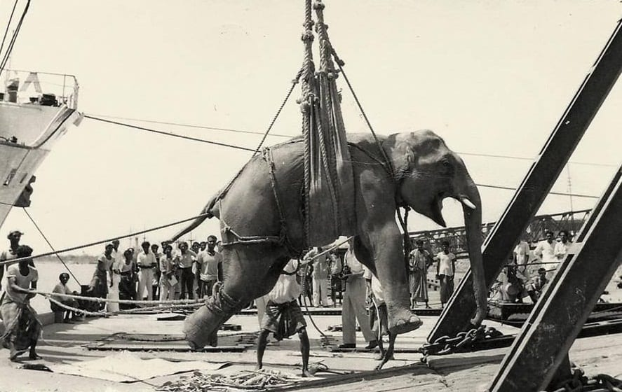 An elephant is loaded on to a ship in Chittagong Port, Bangladesh, in 1960.