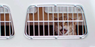Cat in transportation box