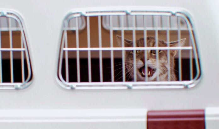 Cat in transportation box